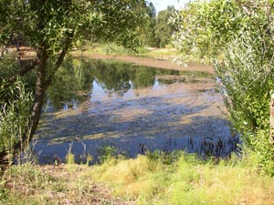 All Seasons Weed Control in Northern CA - controlling pondweeds is a specialty of ASWC.